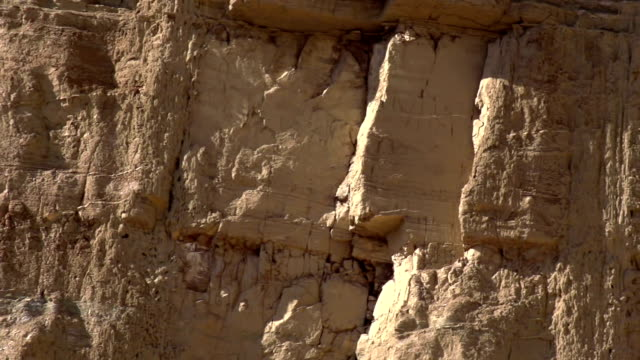 flying near the rocky wall - cespuglio tropicale video stock e b–roll
