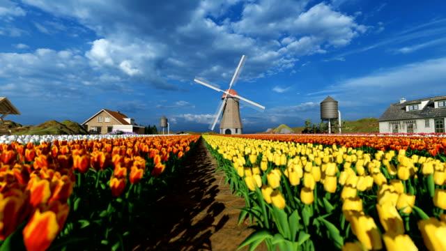 flyga bredvid vackra färgglada rader av blommande tulpaner - tulpan bildbanksvideor och videomaterial från bakom kulisserna