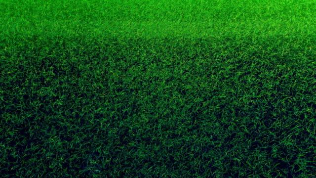 Flying On Grass In Green Stadium 02