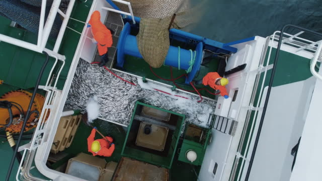 Flying Over a Commercial Fishing Ship where People processing the Fish. Top down view. video