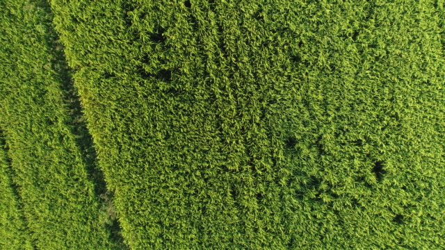 flying over a green lawn
