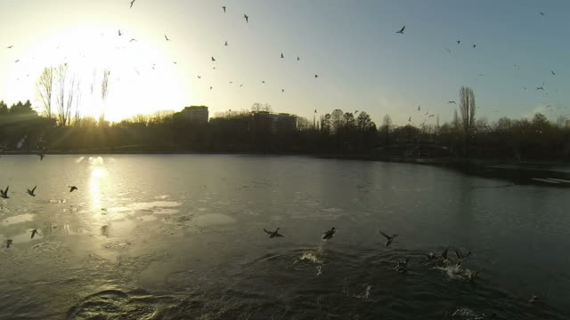 Flying Over A Lake In Bucharest video