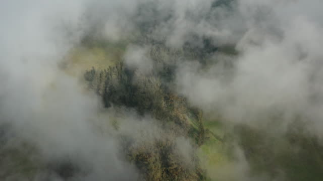 Flying over a misty green forest