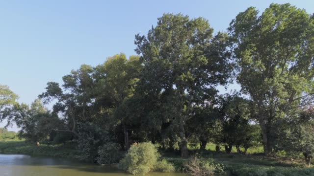 flying over a river sideways near the riverbank with elm trees -  aerial footage video