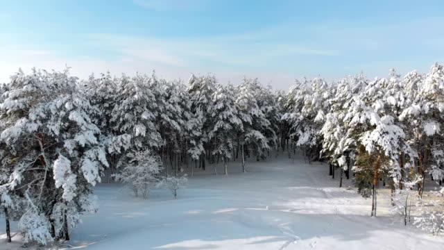 flygande över en snöig vinter skog på en solig dag - djupsnö bildbanksvideor och videomaterial från bakom kulisserna