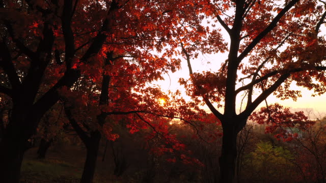 4k flying over autumn park early in the morning aerial shot - perfezione video stock e b–roll