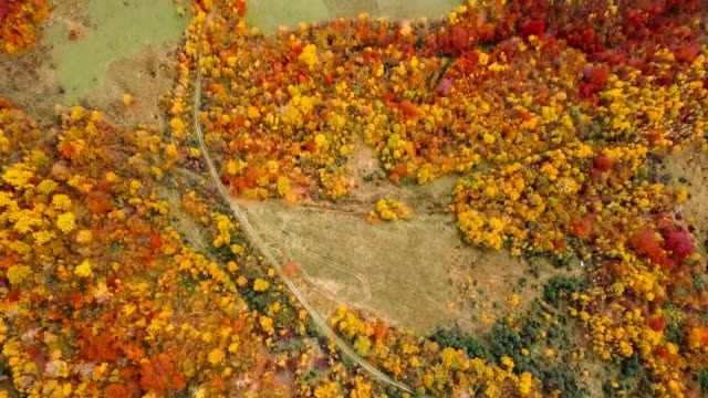 Flying over beautiful autumn forest. Rural road among yellow and red trees. Aerial view. Tilt. video