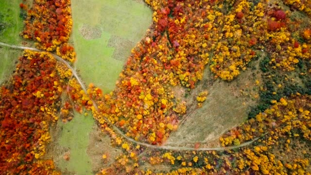 Flying over beautiful autumn forest. Rural road among yellow and red trees. Aerial view. Rotating. – film