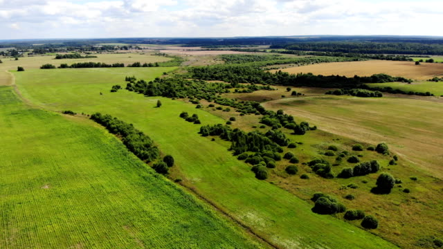 flying over beautiful country side green landscape with field and trees, belarus nature, summer sunny, aerial shot, drone, view from above - дубовый лес стоковые видео и кадры b-roll
