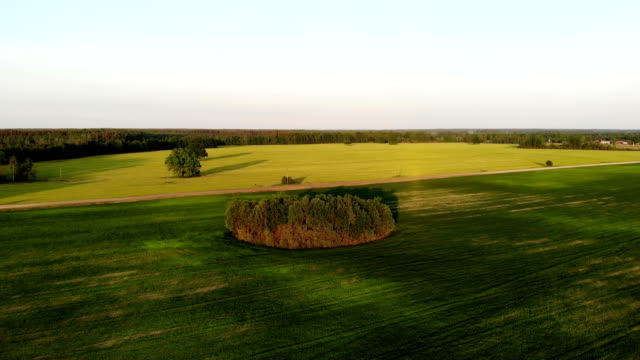 flying over beautiful country side landscape with field and trees, on sunset, aerial shot, drone, view from above - дубовый лес стоковые видео и кадры b-roll