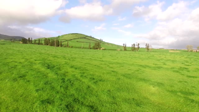 Flying over beautiful green agricultural fields in the Sao Miguel at sunny day, Azores, Portugal. video