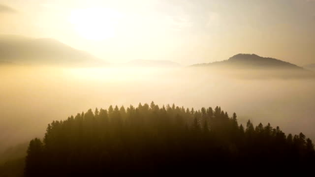 Flying over beautiful mountain forest and fog in Carpathian mountains at sunrise. Aerial view. video