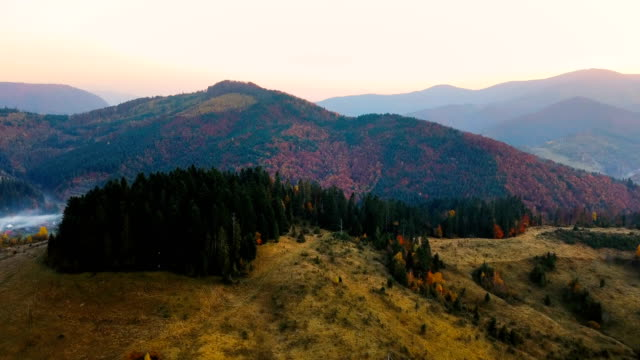 Flying over beautiful mountain forest in Carpathian mountains in autumn at sunset. Beautiful spruce grove on a hill in sunlight. Aerial view. video