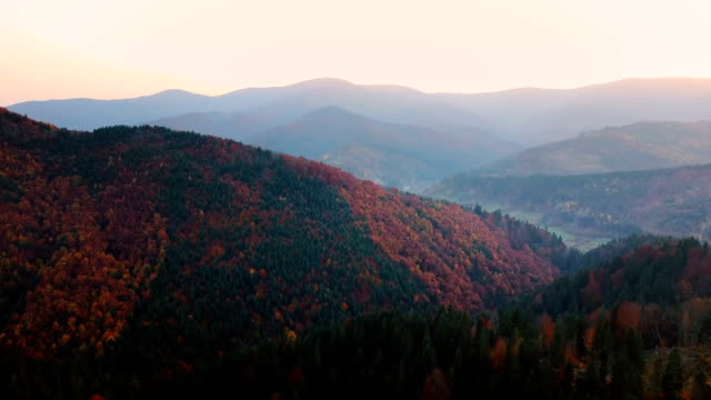 Flying over beautiful mountain forest in Carpathian mountains in autumn at sunset. Beautiful sunlight. Aerial view. video