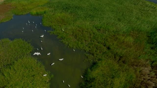 aerial, vögel fliegen über den see. - rohrblattinstrument stock-videos und b-roll-filmmaterial