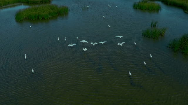 AERIAL, flying over birds in the lake. video