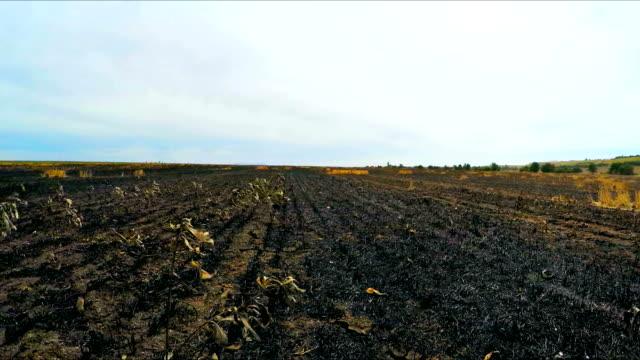 fliegen über burnt field in der ukraine - erodiert stock-videos und b-roll-filmmaterial