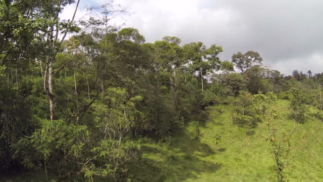 Flying over cattle pasture in Ecuador video