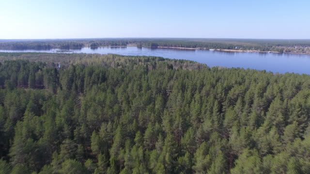 Flying over Coniferous Forest in Spring