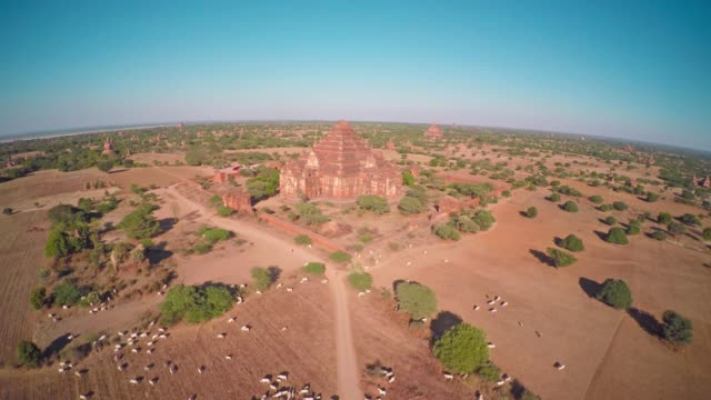 Flying over Dhammayangyi Pagoda in Bagan 4k video
