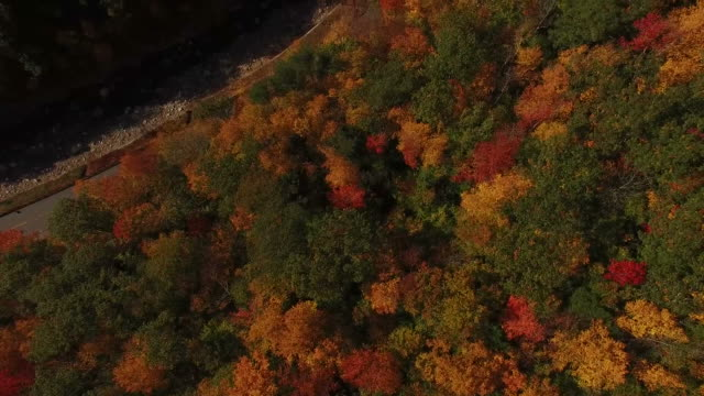Flying Over Fall Colors and Winding Road video