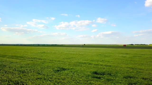 緑の小麦畑上空 - 熟していない点の映像素材/bロール