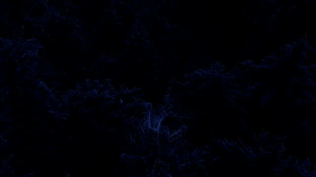 flying over forest at night - trees in mist stock videos & royalty-free footage