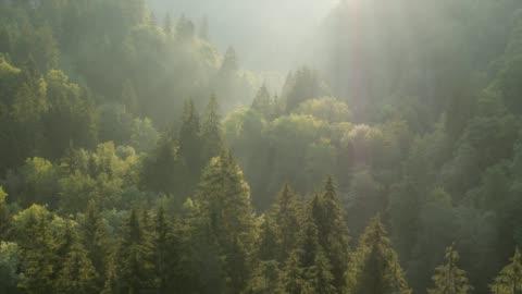 vídeos de stock e filmes b-roll de flying over forest at sunrise - nevoeiro