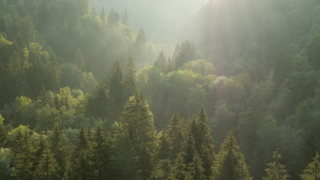 flying over forest at sunrise - trees in mist stock videos & royalty-free footage