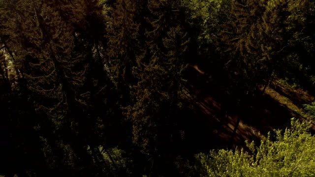 Flying Over Forest. Forest from Above video