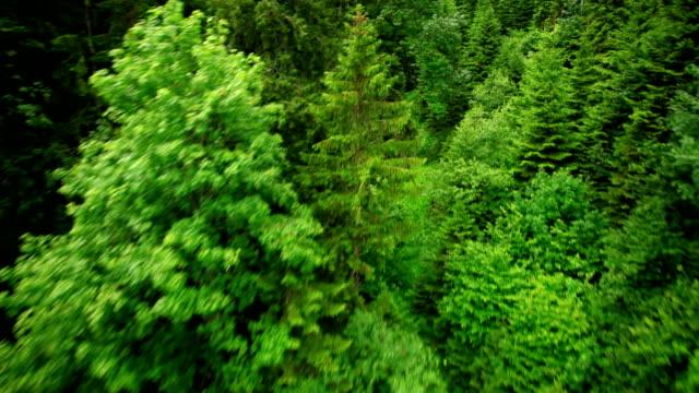 Fliegt über Wald der Alpen – Video