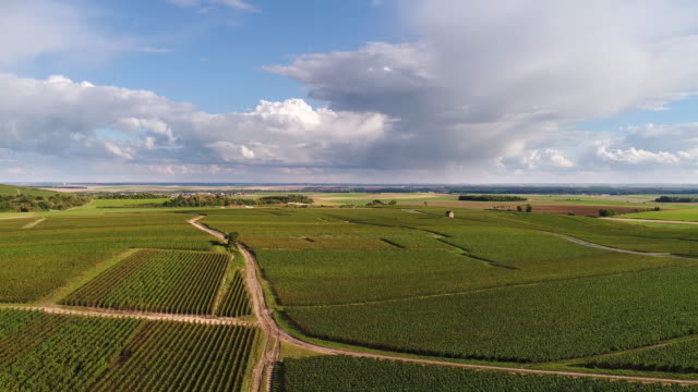 vídeos de stock e filmes b-roll de flying over french vineyards with beautiful cloudscape - champanhe