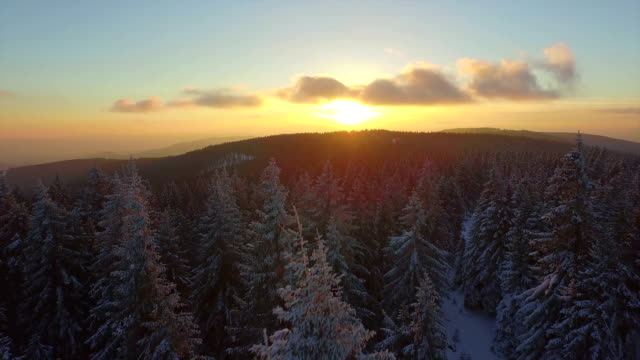 AERIAL: Flying over frozen forest in winter at sunset video