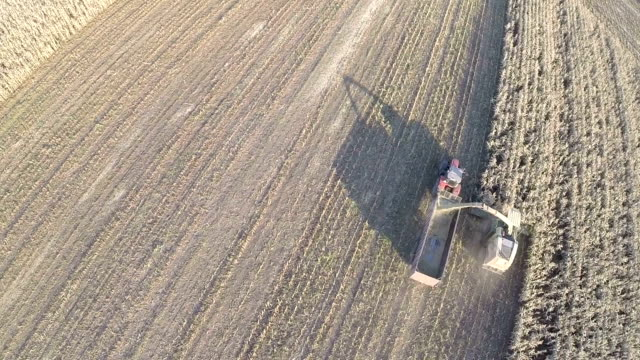 Flying over gathering crops on farmland Aerial view of farm machinery harvesting wheat in vast field.  Cultivation of crops crop plant stock videos & royalty-free footage
