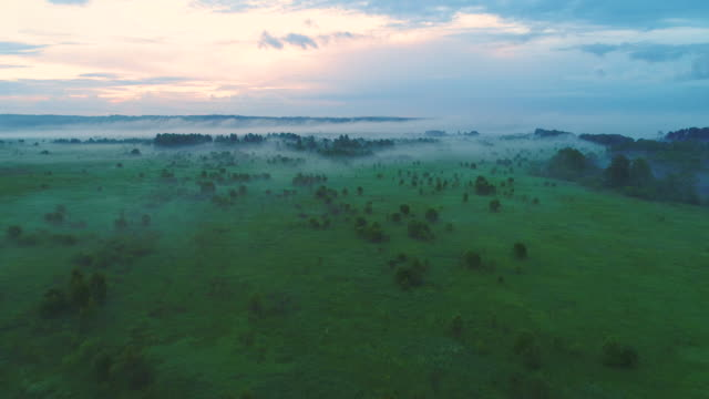 Flying over green field and trees in mist. Aerial view. Warm tint. video