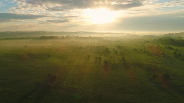 Flying over green meadow and trees in mist against the sun. Aerial view. video