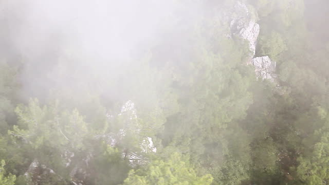 Flying over Hazy Forest video