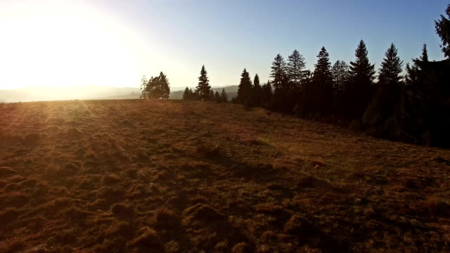 Flying over hills and forest at sunset, wildlife preservation video