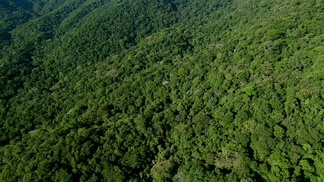 Flying over lush jungle, Rio de Janeiro, Brazil video