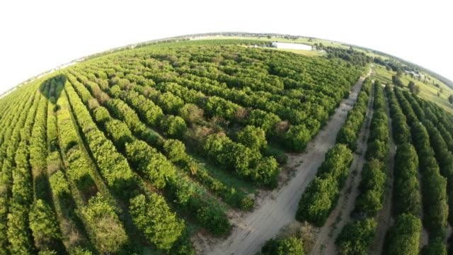 Flying over Orange Grove video