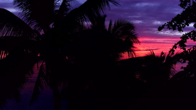 AERIAL: Flying over palm trees towards beautiful pink sunset above the calm ocean in sunny summer on Tahiti island video