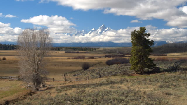 AERIAL: Flying over picturesque meadow fields towards Grand Teton Mountain peaks video