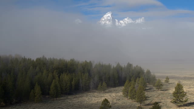 AERIAL: Flying over pine trees and foggy clouds towards Grand Teton mountains video