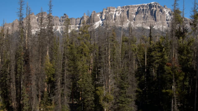 AERIAL: Flying over pine treetops towards stunning eroded tabletop mountains video