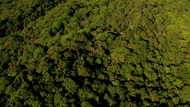 Flying over rainforest to reveal city, Rio de Janeiro, Brazil video