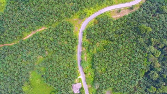 vídeos de stock e filmes b-roll de flying over rural road through oil palm tree farm, aerial view - oleo palma