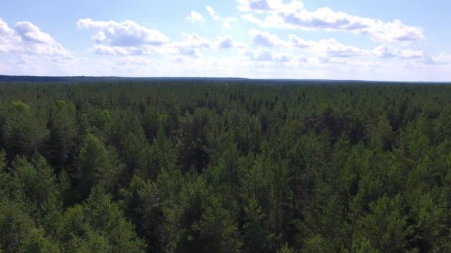 Flying over Taiga in Summer The video is taken from the quadrocopter. The camera flies over the trees to the horizon. The forest is visible to the horizon siberia stock videos & royalty-free footage