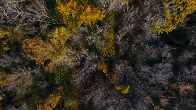 Flying over the beautiful sunny autumn forest trees. video