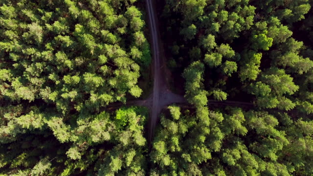 Flying over the crossing roads in summer pine forest 4K video