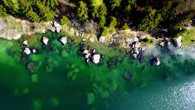 vídeos de stock e filmes b-roll de flying over the forest - suíça